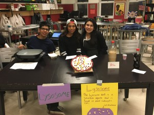 lyosome cell project